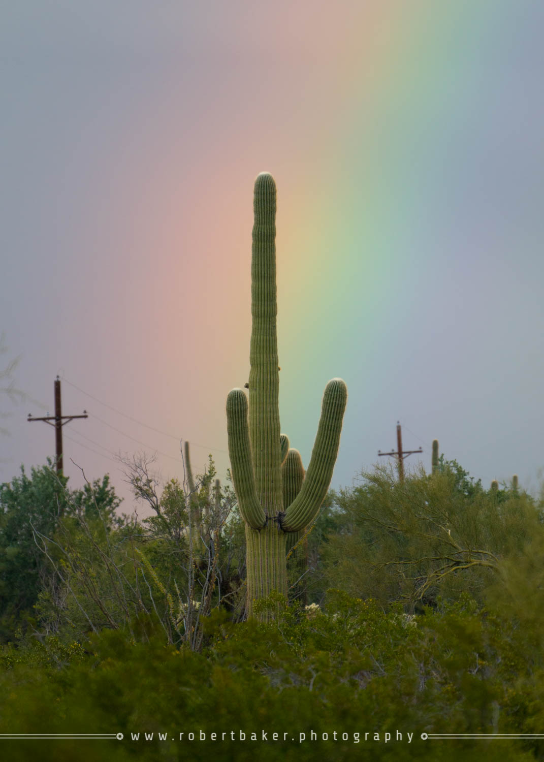 sunset rainbow on organ pipe cactus