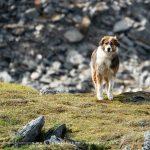 Mountain dog at Hatcher Pass