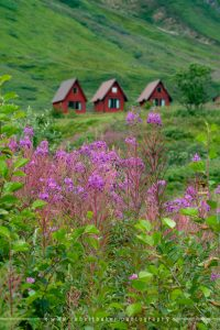 Hatcher Pass with fireweed