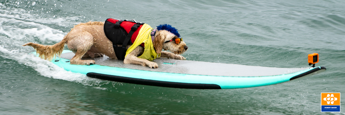 Derby the Dog Surfing